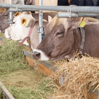Animal-Feed-More-Nutrition