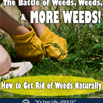 Weed, Weeds, and More Weeds!
