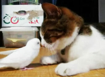 cat and bird21