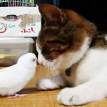 Amazing Cat and Bird Friends!