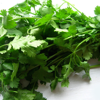 Love Cilantro? Hate Cilantro?