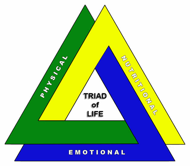 the triad of life