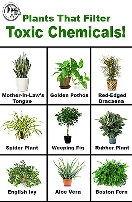 Plants That Filter Indoor Air