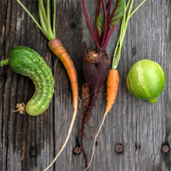 The Beauty of Ugly Foods