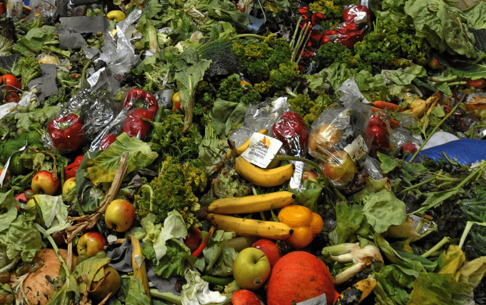 wasted food online holistic health