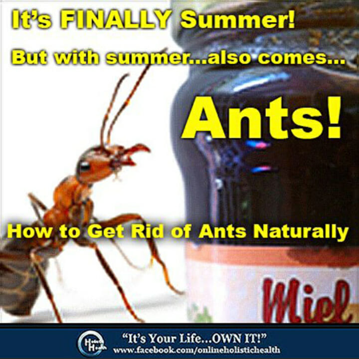 How To Get Rid Of Ants In Kitchen Cabinets: How To Get Rid Of Ants Naturally
