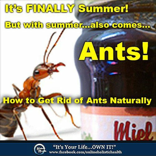 How to Get Rid of Ants Naturally online holistic health