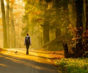 Learn How Walking Mindfully Can Improve Your Health!