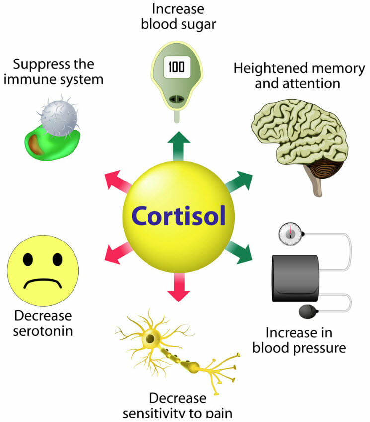 Stress and cortisol