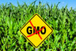 Genetically-Modified-Foods-Controversy